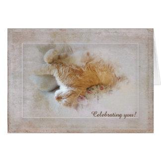 Cartão aniversário do gato de gato malhado