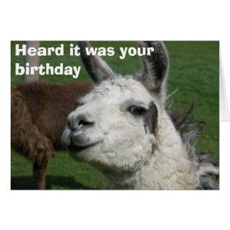 Cartão Aniversário do lama