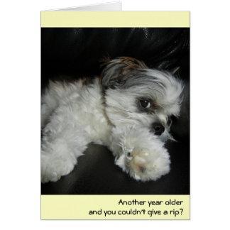 Cartão Aniversário - não dê um rasgo!