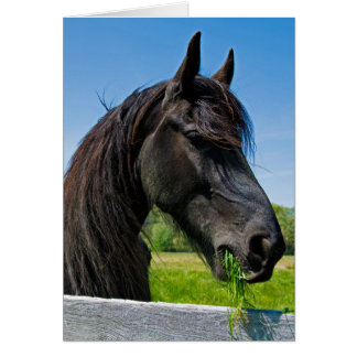 Cartão aniversário preto do cavalo do frisão