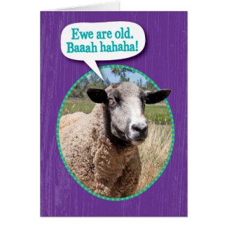 Cartão Aniversário velho do tiro dos carneiros da ovelha