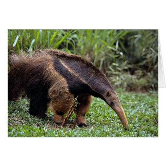 Cartão Anteater gigante (tridactyla do Myrmecophaga)