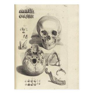 Cartão antigo da anatomia do crânio do impressão