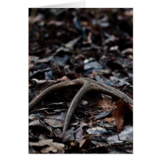 Cartão Antler 01 dos cervos