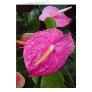 Cartão Antúrios cor-de-rosa