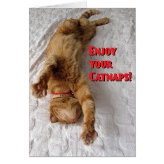 Cartão Aposentadoria dos amantes do gato