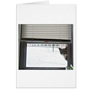 Cartão Aqui gatinho do gatinho