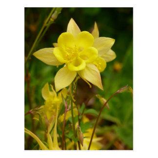 Cartão aquilégia amarelo da flor