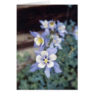Cartão Aquilégia azul de Colorado