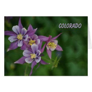 Cartão Aquilégia azul de Colorado todo o cumprimento da