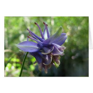 Cartão Aquilégia azul macio