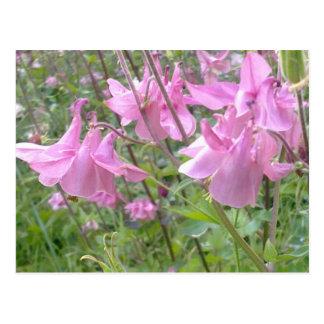 Cartão aquilégia cor-de-rosa das flores