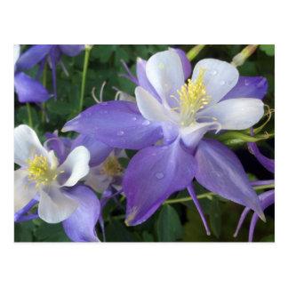 Cartão aquilégia das flores