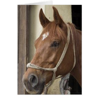 Cartão árabe dos cavalos