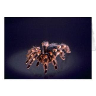 Cartão Aranha assustador do Tarantula