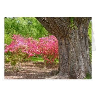 Cartão Arboreto de Arnold no primavera