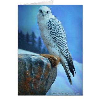 Cartão árctico do falcão