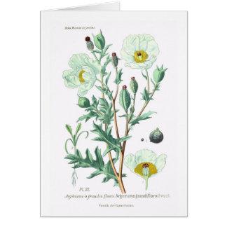 Cartão Argemona grandiflora