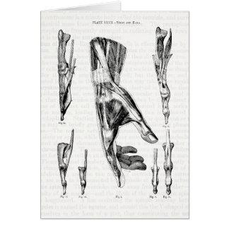 Cartão Arte da anatomia os músculos da mão e do pulso