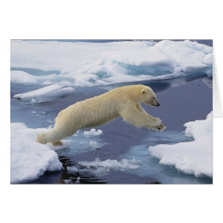 Cartão Ártico, Svalbard, urso polar que estende e