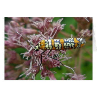 Cartão Artigos da traça de Webworm do Ailanthus