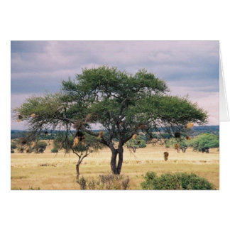 Cartão Árvore africana da salsicha