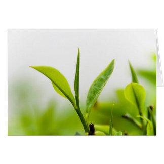 """Cartão Árvore chinesa do chá, """"botão e duas folhas"""""""