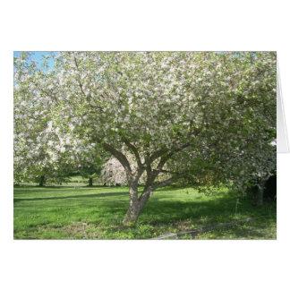 Cartão Árvore de Apple na flor