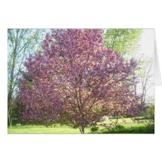 Cartão árvore de Caranguejo-Apple na flor