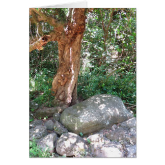 Cartão Árvore de manga velha