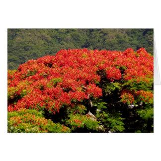 Cartão Árvore de Poinciana