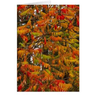 Cartão Árvore de Sumac na cor do outono no peixe branco,