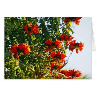 Cartão Árvore de tulipa africana, Bucerias, México