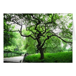 Cartão Árvore do Central Park