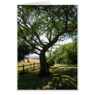 Cartão Árvore obscuro