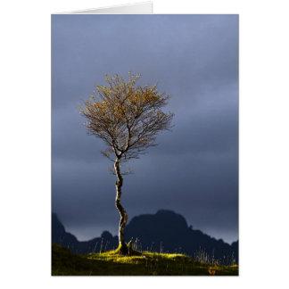 Cartão Árvore solitária travada em Sun