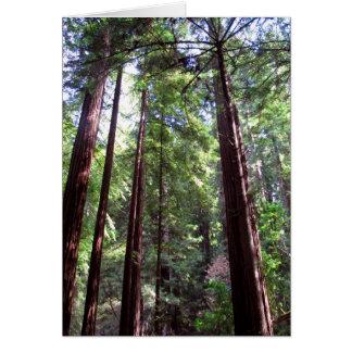 Cartão Árvores da sequóia vermelha
