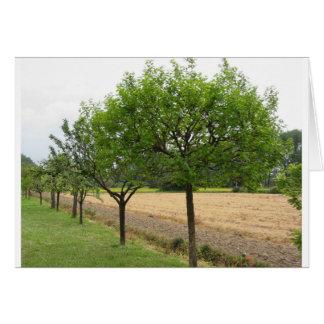 Cartão Árvores de fruta com as folhas do verde no