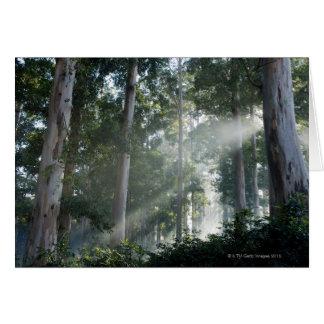 Cartão Árvores de goma (eucalipto) na floresta tropical