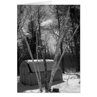 Cartão Árvores de vidoeiro em B&W na neve