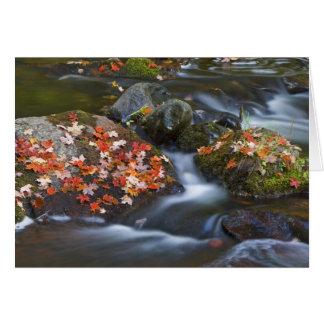 Cartão As folhas de bordo vermelhas atapetam as rochas no