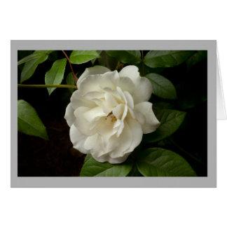 Cartão As folhas do rosa branco e do verde na primavera