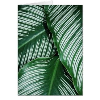 Cartão As folhas do verde com branco listram o close up