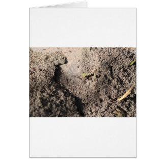 Cartão As formigas vão marchar