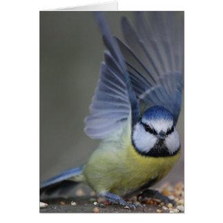 Cartão Asas bonitas do pássaro do melharuco azul