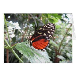 Cartão Asas da borboleta