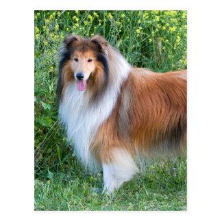 Cartão áspero do retrato do cão do Collie