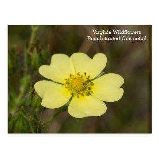 cartão Áspero-frutificado do Wildflower do VA do