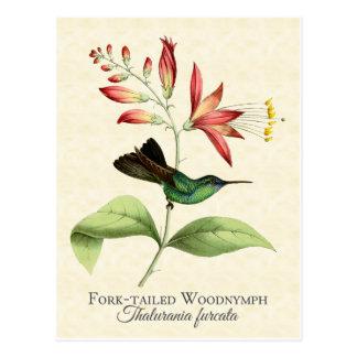 Cartão atado forquilha da arte do colibri da ninfa