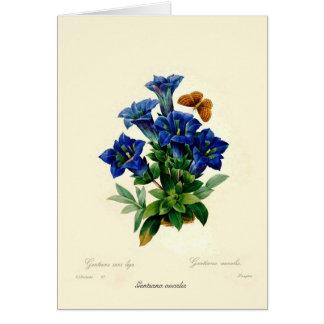 Cartão Aucalis Gentiana